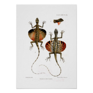 Flying Lizard Poster