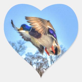 Flying Mallard Duck Drake Wildlife Photo Sticker