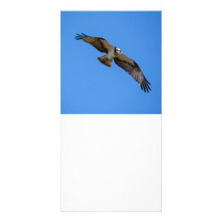 Flying osprey with a target in sight personalised photo card