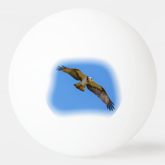 Flying osprey with a target in sight ping pong ball