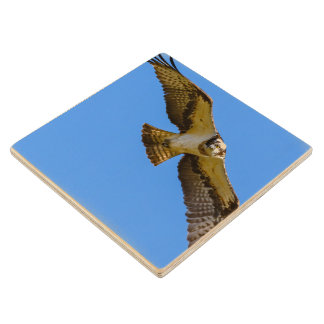 Flying osprey with a target in sight wood coaster