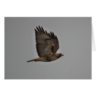 Flying Red-tailed Hawk Card