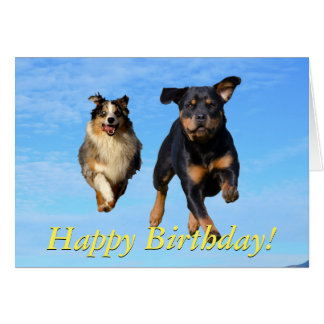 Flying rottweiler and collie card