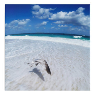 Flying Seagull At The Beach Acrylic Wall Art