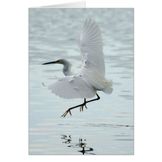 Flying Snowy Egret Card
