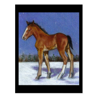 FOAL IN SNOW: EQUINE ART: COLOR PENCIL POSTCARD