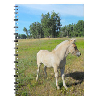 Foal Notebook