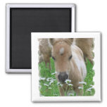 Foal Smelling Daisies Square Magnet Fridge Magnet