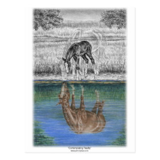 Foal Water Reflection of Horse Postcard