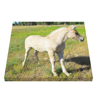 Foal Wrapped Canvas