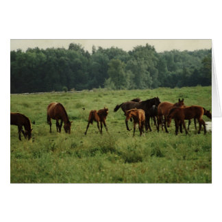 """Foals and Mares"" Horse Photo Greting Card"