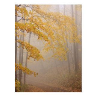 Fog and Autumn foliage, Great Smoky Mountains Postcard