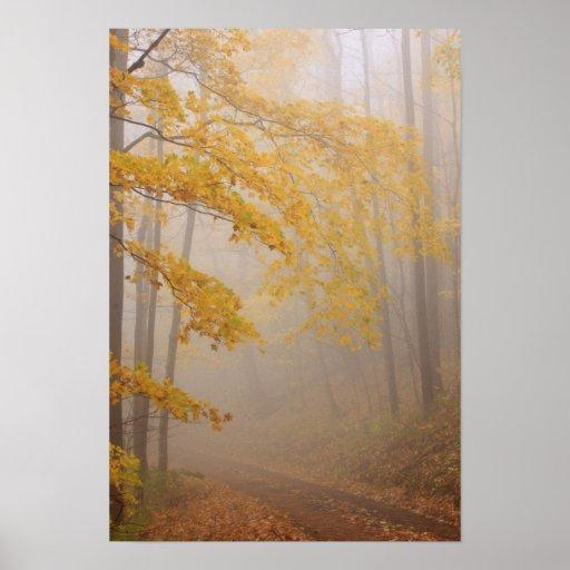 Fog and Autumn foliage, Great Smoky Mountains Print
