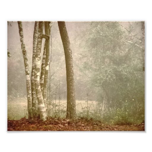 Fog in Forest Art Photo