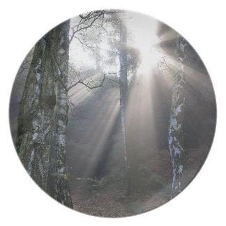 fog light forest rural landscape plate