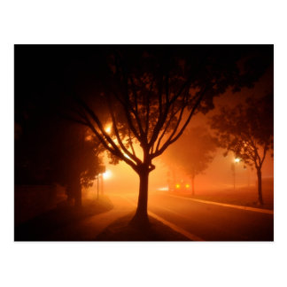 Fog Mystery Tree Postcard