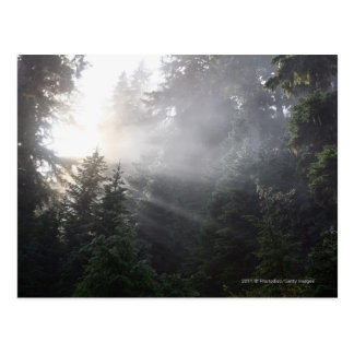 Fog & Sun Beams in a Washington Forest Postcard