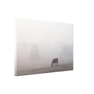 Foggy Grazing Canvas Print