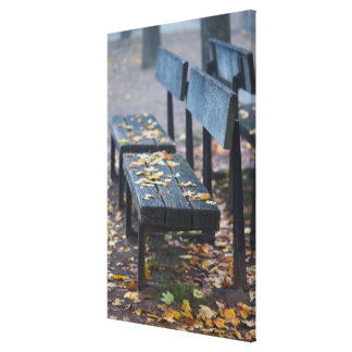 Foggy morning park bench, Germany Canvas Print