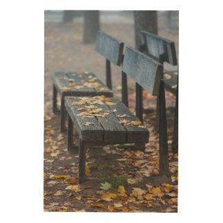 Foggy morning park bench, Germany Wood Print
