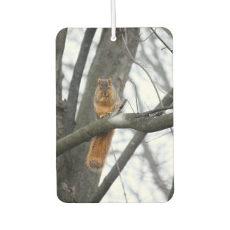 Foggy Morning Squirrel Car Air Freshener