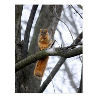 Foggy Morning Squirrel Postcard