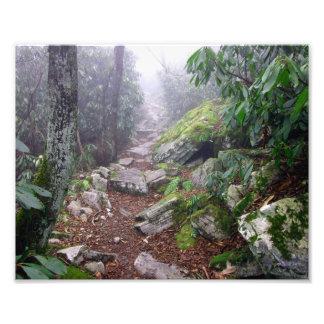 Foggy Trail Photograph