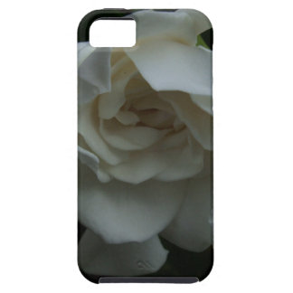 Folds of Ivory iPhone 5 Cover