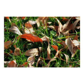 Foliage and Grass Poster