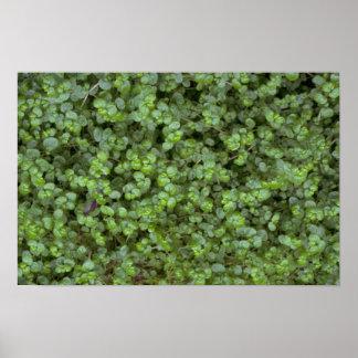 Foliage texture poster