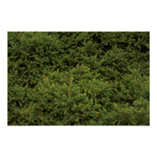Foliage texture posters