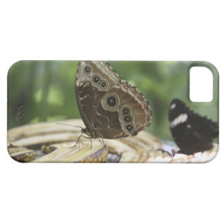Food for Butterflies iPhone 5 Covers