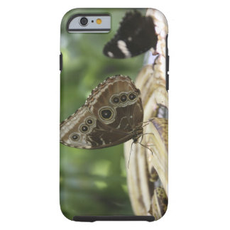 Food for Butterflies Tough iPhone 6 Case