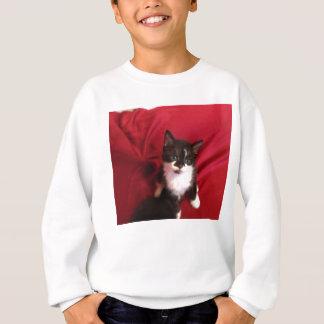 Foofy the kitten with velvet red sweatshirt