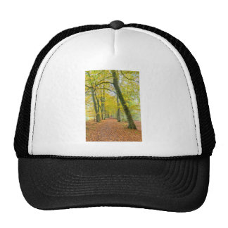 Footpath in forest covered with fallen leaves cap
