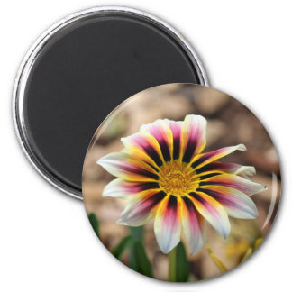 For the Love of Colour - Kaleidoscope Magnet