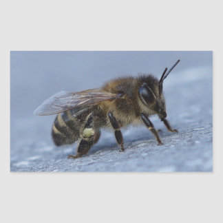 Foraging bee rectangular sticker