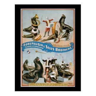 Forepaugh and Sells - vintage circus sealions Postcard
