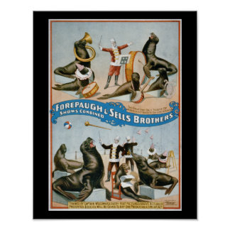Forepaugh and Sells - vintage circus sealions Poster