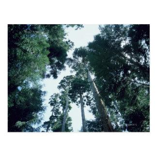 Forest 25 postcard