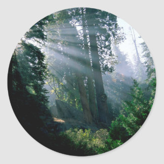 Forest A Wonder In Woods Round Sticker
