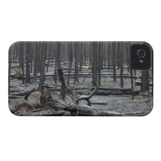 Forest after fire in Yellowstone National Park iPhone 4 Case-Mate Cases