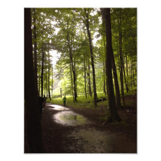 Forest After the Rain Photo Print