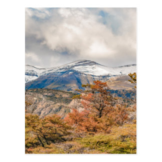 Forest and Snowy Mountains, Patagonia, Argentina Postcard