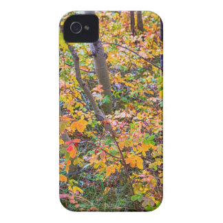 Forest Colors Case-Mate iPhone 4 Cases