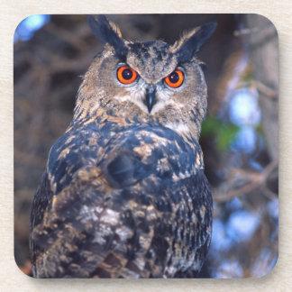 Forest Eagle Owl, Bubo bubo, Native to Eurasia 2 Beverage Coasters