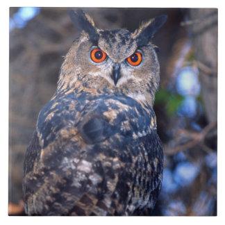 Forest Eagle Owl, Bubo bubo, Native to Eurasia 2 Large Square Tile