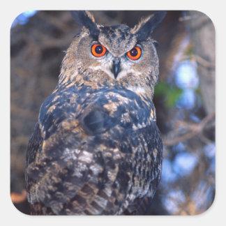 Forest Eagle Owl, Bubo bubo, Native to Eurasia 2 Square Sticker