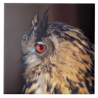 Forest Eagle Owl, Bubo bubo, Native to Eurasia Large Square Tile