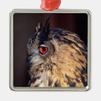 Forest Eagle Owl, Bubo bubo, Native to Eurasia Silver-Colored Square Decoration